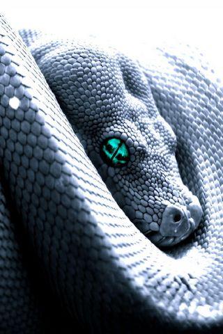 Велика змія