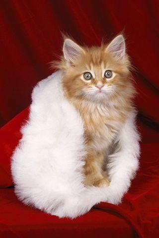cat-santa-paws