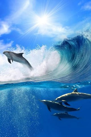 Surfing Dolphines