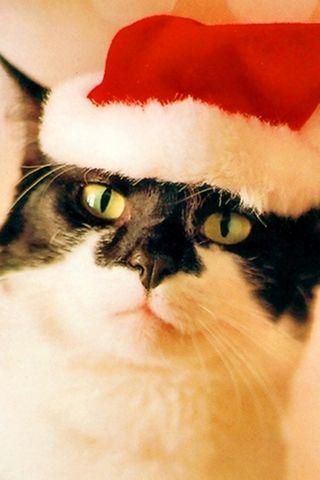 Santa-animals