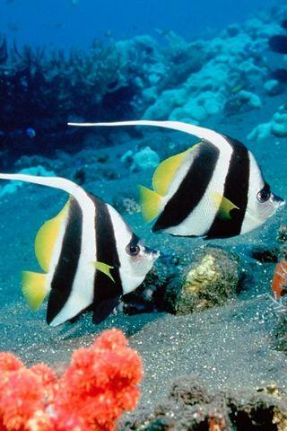 दो मसख़रा मछली