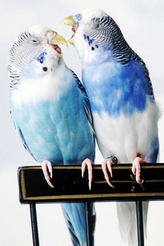 Cantankerous-Birds