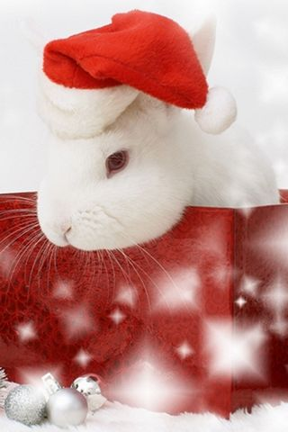 Santa-กระต่าย
