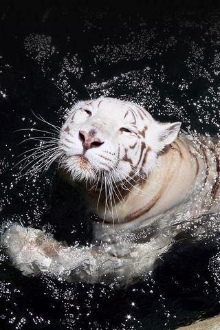 เสือขาว