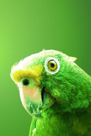 Green Bird