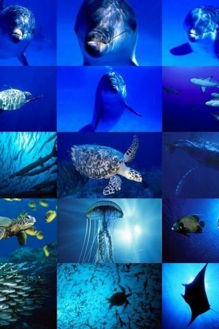 Under Water Sea