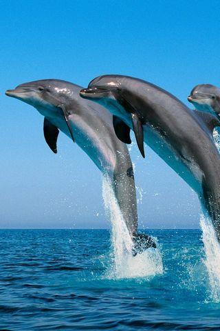 Dolfine