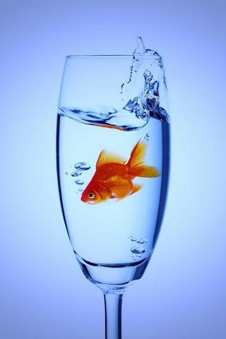 ปลา HD