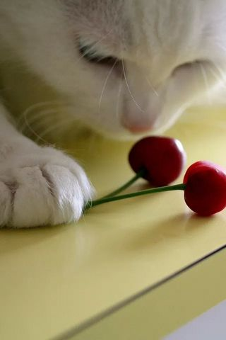 Cats-and-Cherry