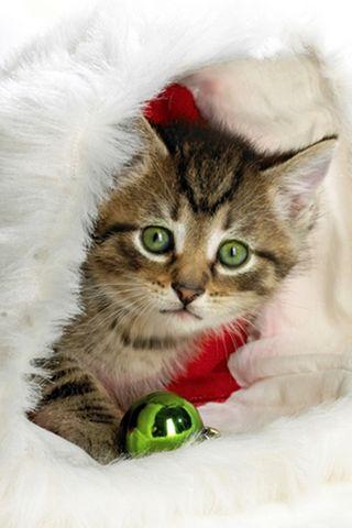 Santa-hayvanlar-6