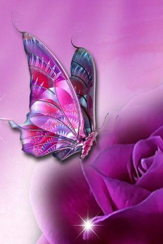紫色的蝴蝶