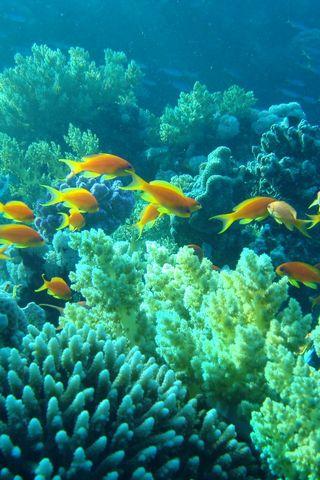 Sotto il pesce d'acqua