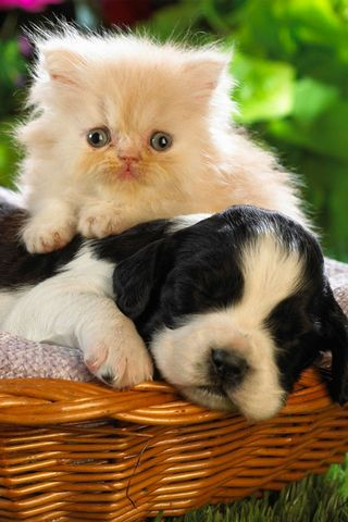 KITTY & DOG