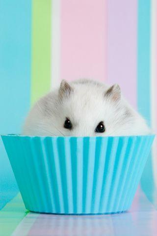 Mouse Cupcake