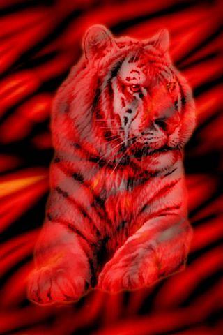Harimau Merah