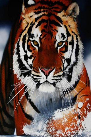 Great Tiger