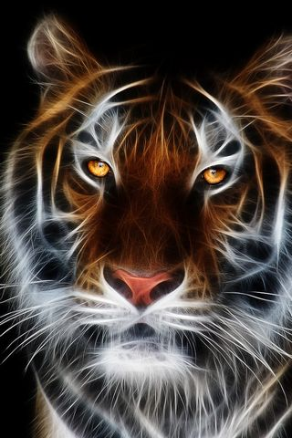Fractic Tiger
