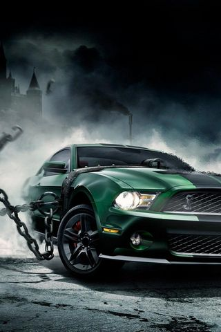 Unleashed Shelby