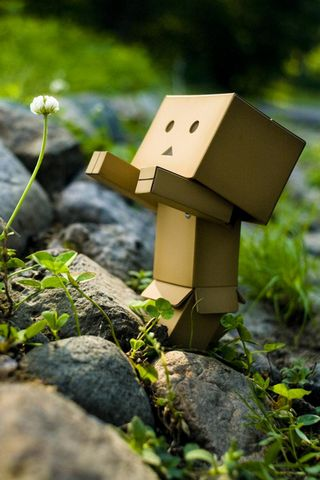Danbo Reaching
