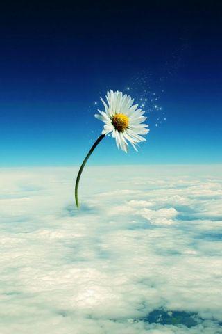 زهرة في السماء