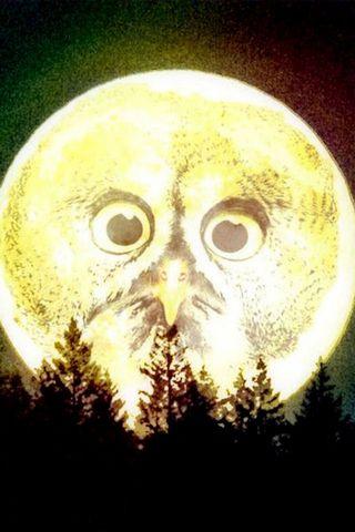 उल्लू चंद्रमा