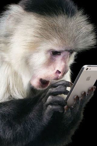 Monkey-& Iphone