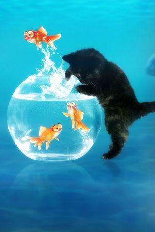 Cute Kitten And Fish