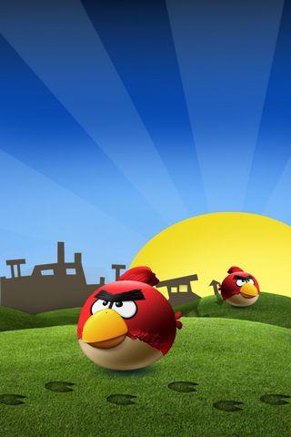 Aves com raiva