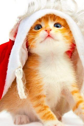 Kitten Holidays