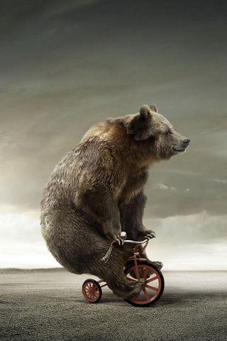 Bear Cycle