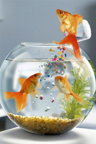 Cute Fishes
