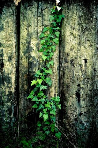 Wooden-fence-on-the-vine