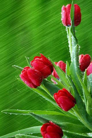 फूल कलियां