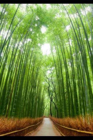 Floresta de Tóquio