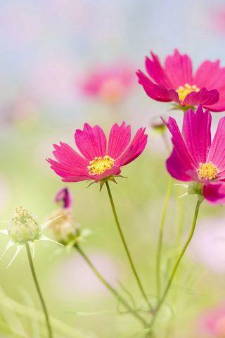 Свіжі квіти
