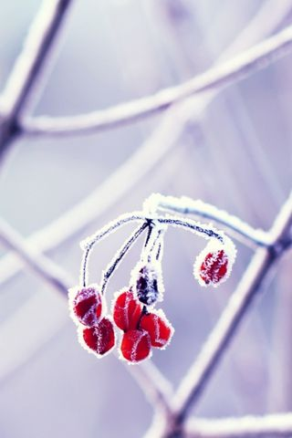 Red Frozen Fruits