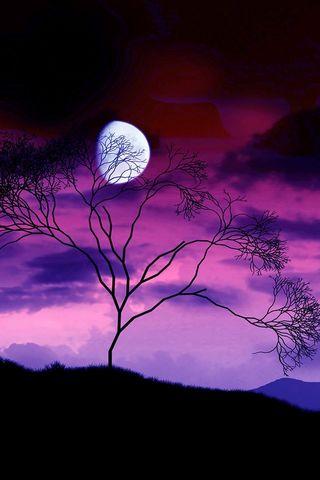 Lila Mond