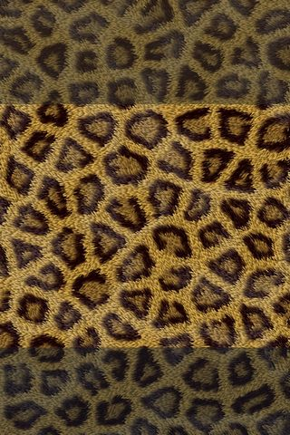 Leopard - Lock Screen - IP4