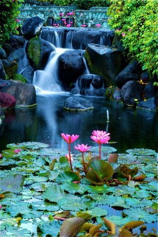 Beautiful River Waterfall & Lotus