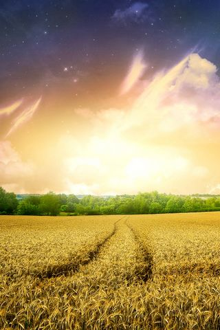 Beautiful Cornfield Nature