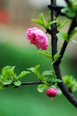 Досить маленькі квіти