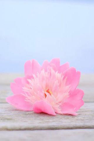 핑크 - 꽃