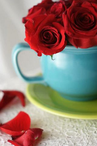 Red Flower On Cup
