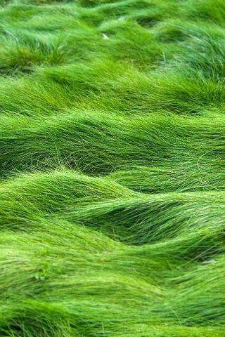 Grass Wave