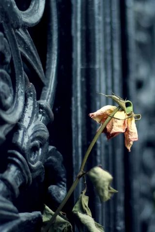 Уличный цветок