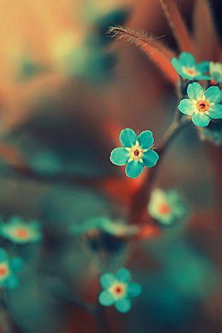 Mavi yaprakları
