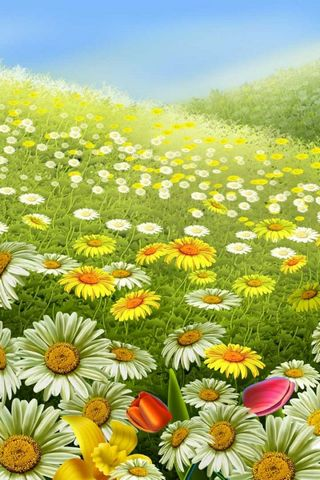 Colors Of Spring Daisies And Field