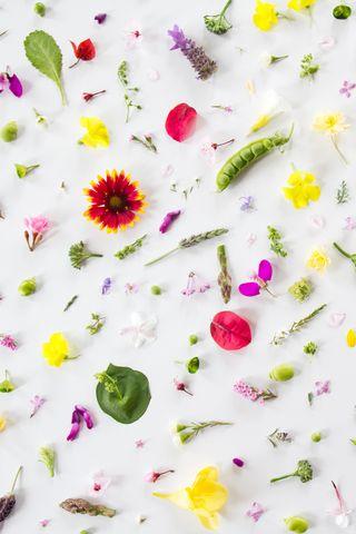 Çiçek Yaprak