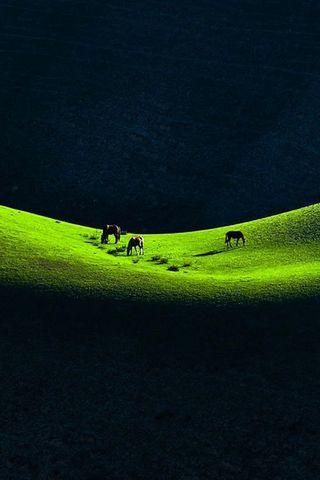 Horses-on-the-prairie