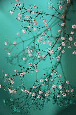 Pretty-little-Flowers
